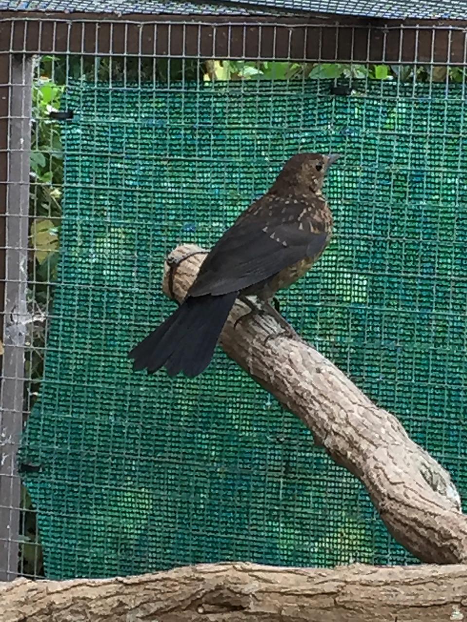 Blackbird Orwell
